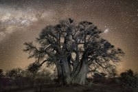 ancient-oldest-trees-starlight-photography-beth-moon-10