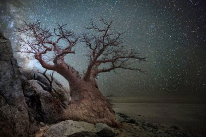 ancient-oldest-trees-starlight-photography-beth-moon-6