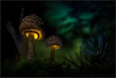 champignon-illumine