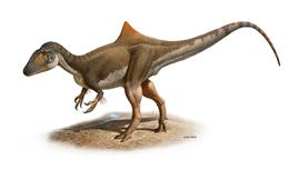 Hypothetical reconstruction of the Flesh-eating dinosaur Concavenator that lived 125 my ago (Early Cretceous) in Las Hoyas (Cuenca, Central Spain). This animal is interprete as hunchback carcharodontosaurian with non-scale skin appendages on his arms