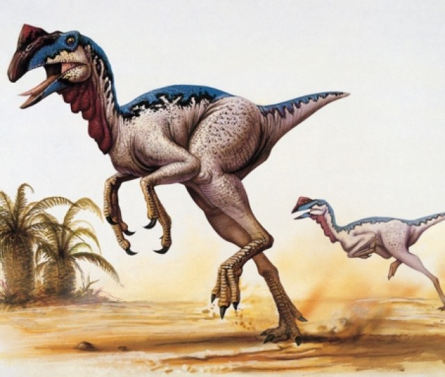 Dinosaurs Neither Warm Blooded Nor Cold Blooded