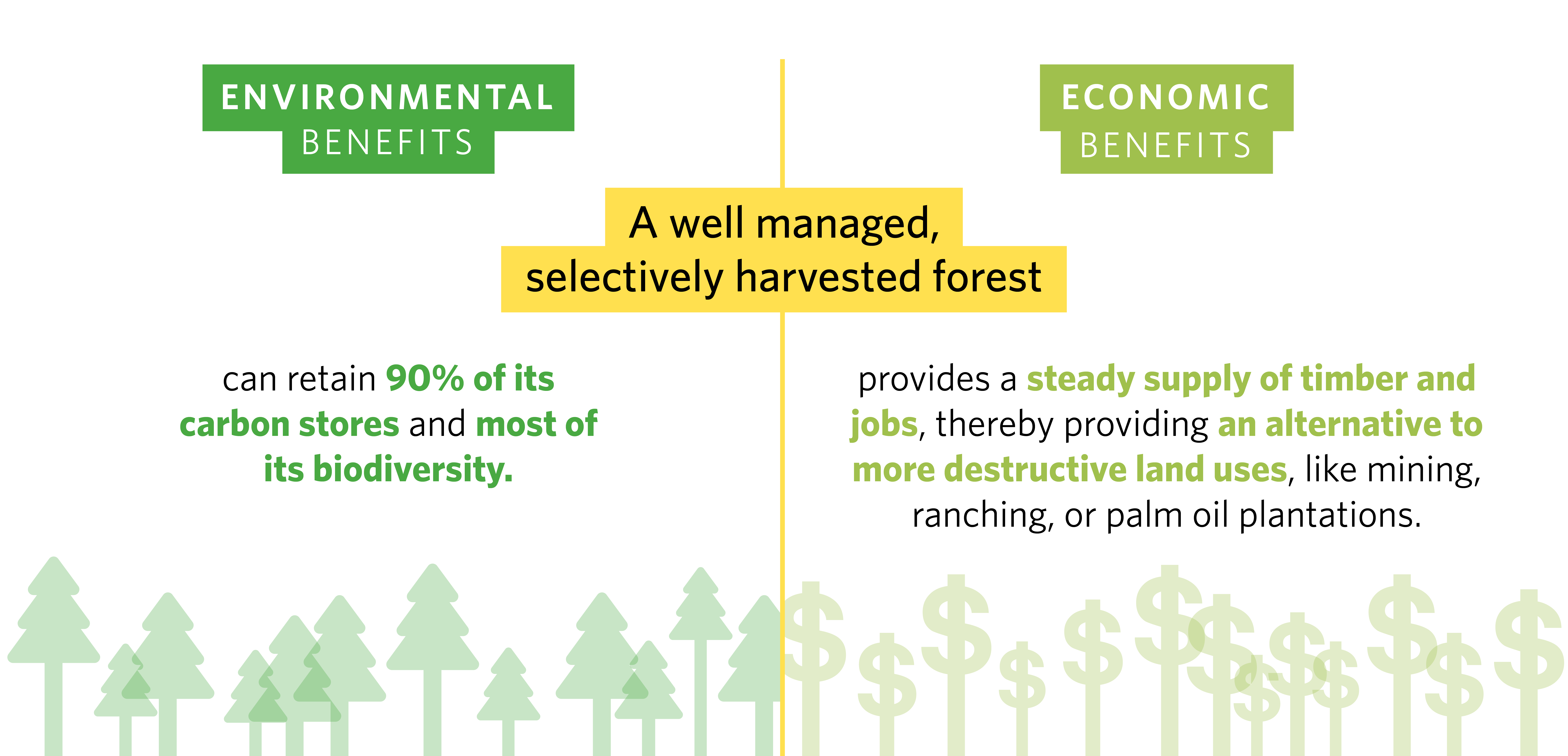 Forestry methods and the past and current realities of swedish forestry,. Cutting Carbon With Greener Chainsaws