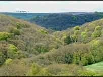 Ancient Woodland at Tarr Steps/ENPA