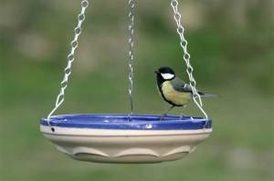 Hanging bird bath and great tit. Pic Nigel Blake (rspb-images.com)