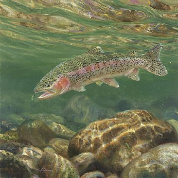 Rainbow Trout Painting Art By Mark Susinno