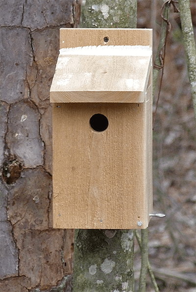 Prothonotary warbler nest box.