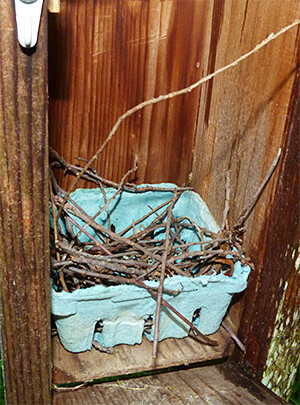 Partial house wren nest at Sailboat Pond (5/3/16).
