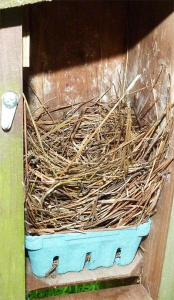 Cow Pasture nest with bluebird nest (5/31/16).