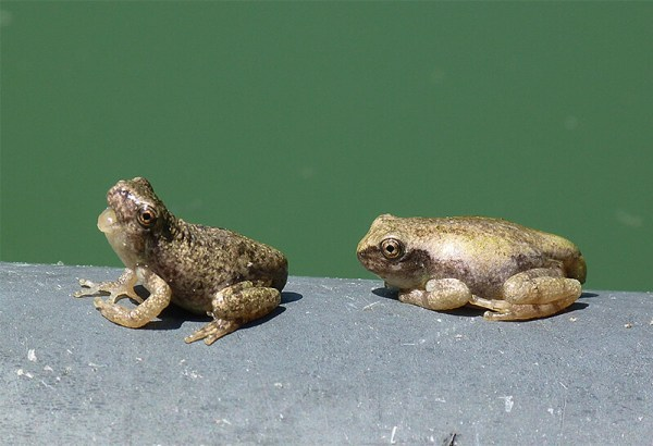 After several weeks there were very many young frogs at the pond.