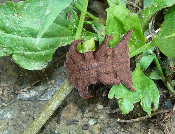 Monkey slug.