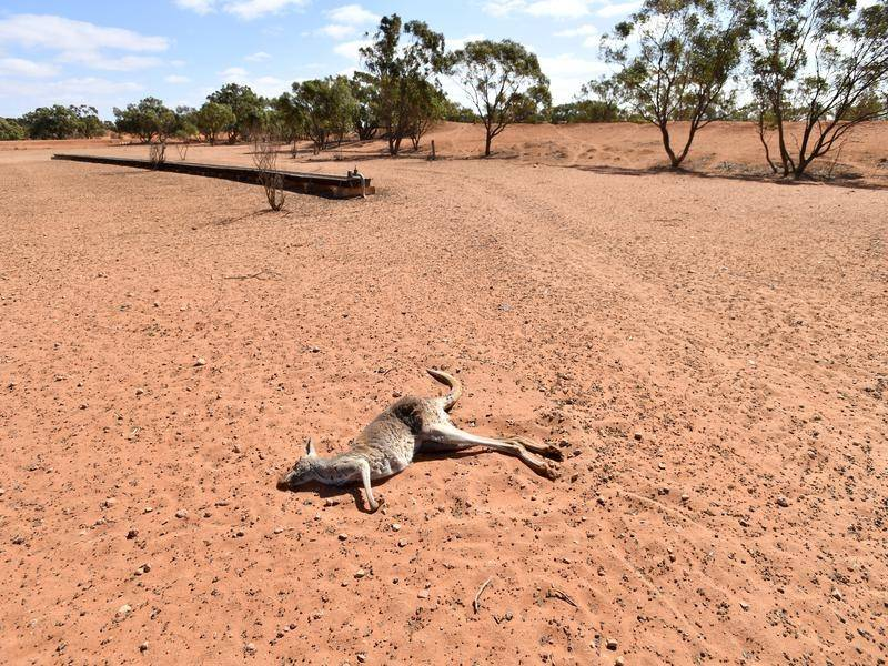 The NSW drought and the climate emergency – act now!