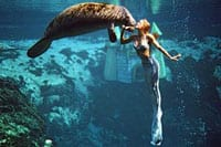 Weeki Wachee mermaid and manatee