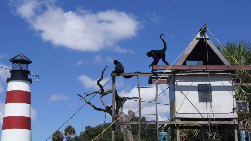 monkeys on monkey island