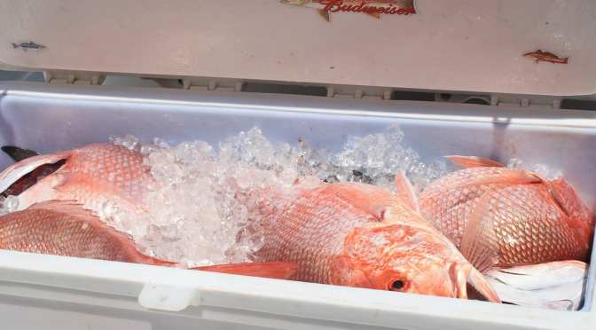 39 days added to Gulf Red Snapper Season: Let's Fish!
