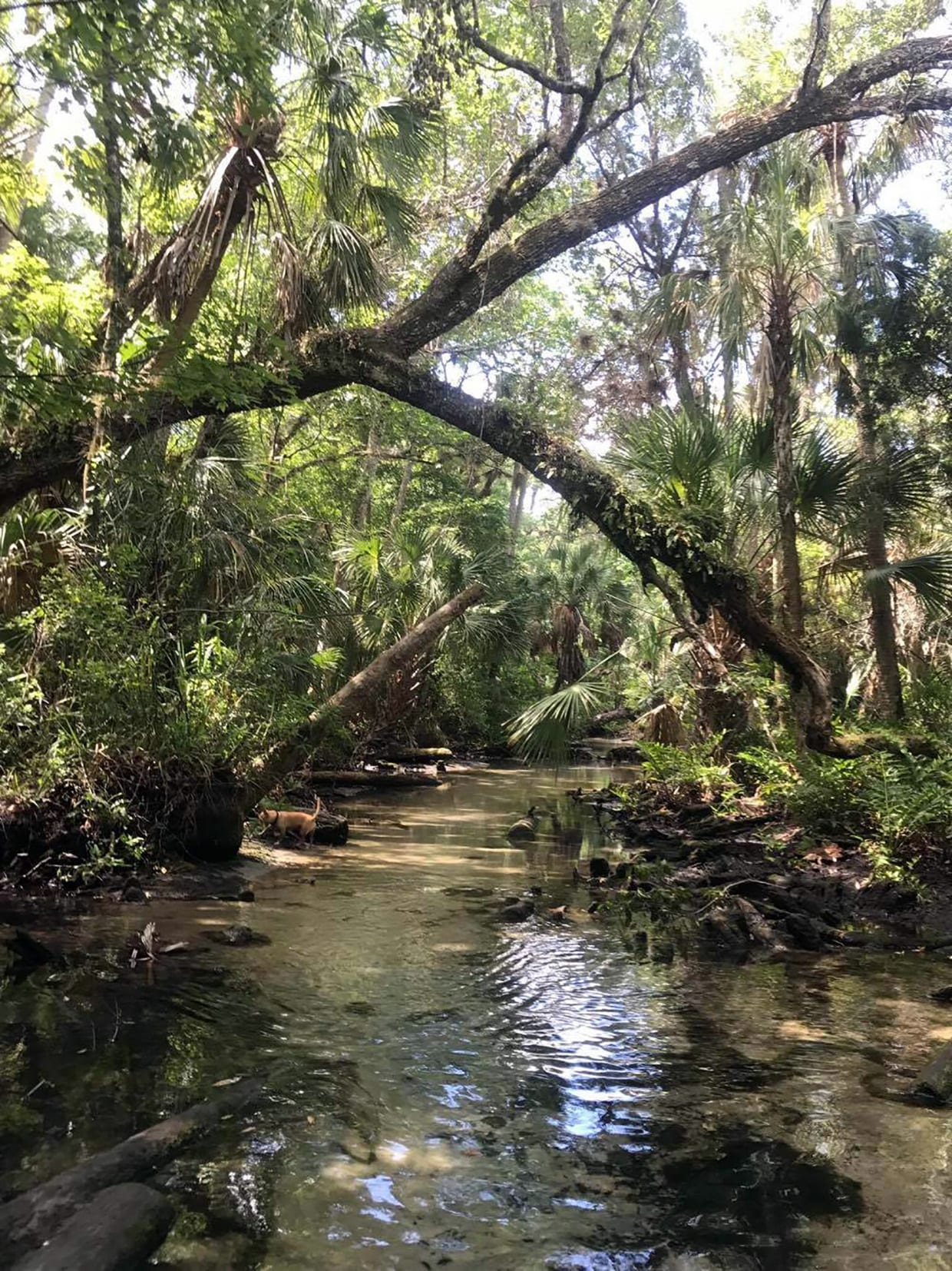 Chassahowitzka River Keepers and Homosassa River One-Rake-at-a-Time Working Together to Protect and Restore our Rivers