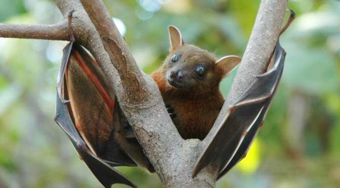 Wildlife Park Reopens: October features Bats
