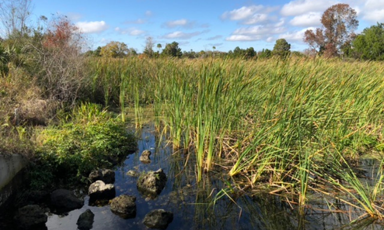 wetlands at crystal river
