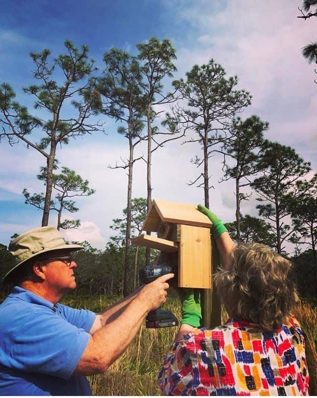 intalling bird box