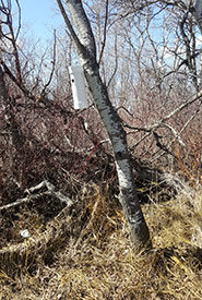 Location of nest tube #4 (Photo by Sarah Ludlow/NCC staff)