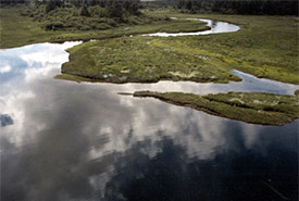 Campbell River Estuary, BC (Photo by NCC)