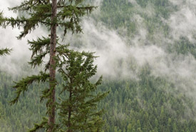 Misty Darkwoods forest, BC (Photo by Bruce Kirkby)