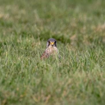 """Nature en chemins vient de publier 11 nouvelles photos dans la galerie """"Vie animale"""""""