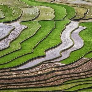 Nord Vietnam-Région de Nghia Lo-Cultures en terrasses