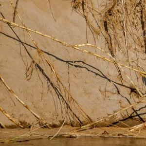 Aigrette blanche faisant du trapèze-Madagascar