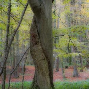 France-Nord-Forêt de Mormal
