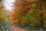 Flamboyante forêt en automne !