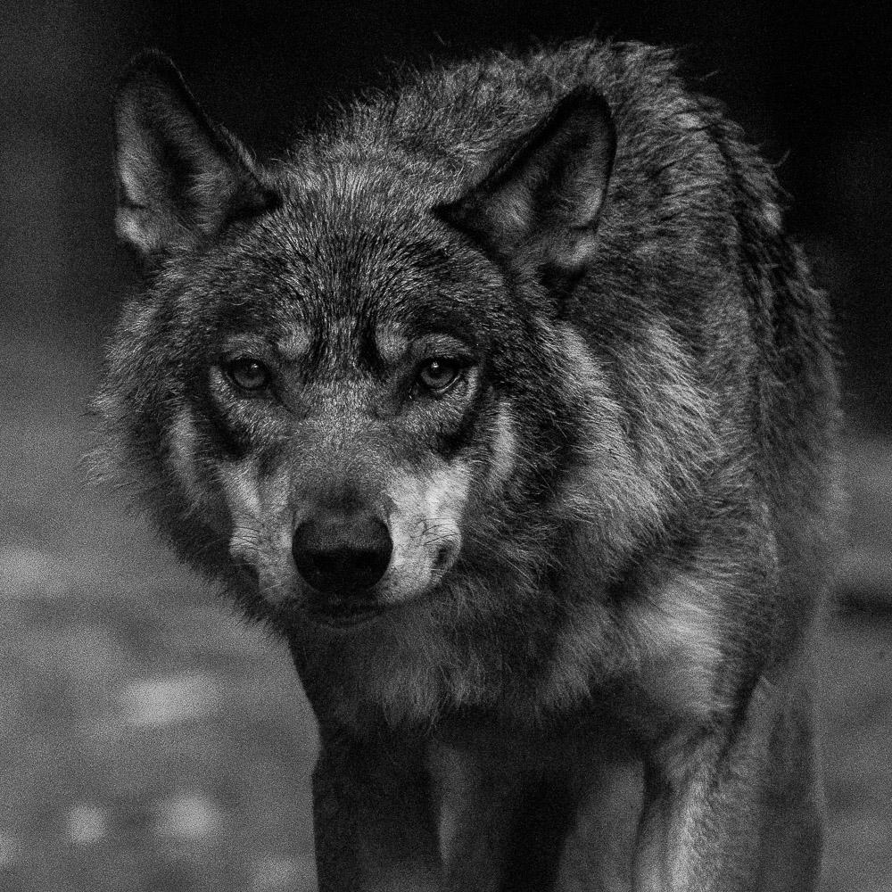 """De retour de Pologne voici quelques nouvelles photos sur la galerie """"Vie animale"""" de Nature en chemins"""