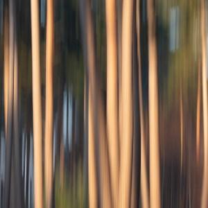 Forêt de Rambouillet-Yvelines-France