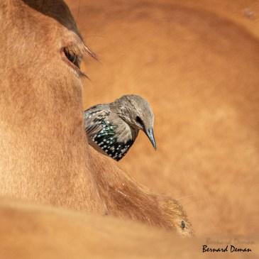 Le Festival international de la photo animalière de Montier en Der, nouvelle victime du COVID