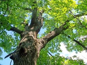 Formation pour communiquer avec les arbres