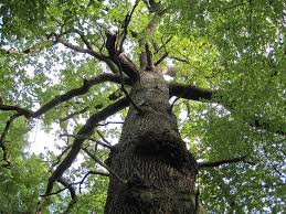 les arbres et leurs bienfaits même à distance