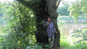 Sylvothérapie : la médecine des arbres celtiques