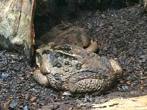 amphibian-16