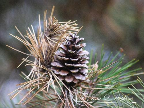 pinecone-4