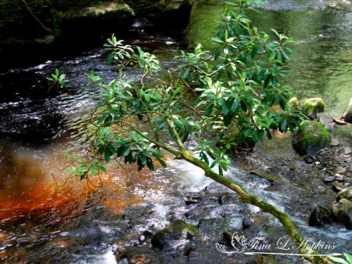 waterscape-16