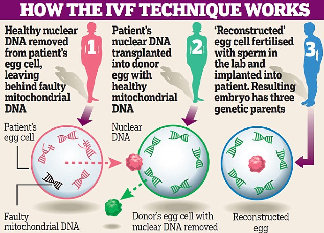 have-acupuncture-treatments-for-3-6-prior-to-your-IVF-cycle