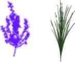 Icones plantes