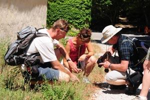 Initiation à la botanique