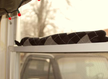 Draft Snake in Window