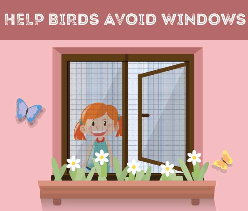 help-birds-avoid-windows