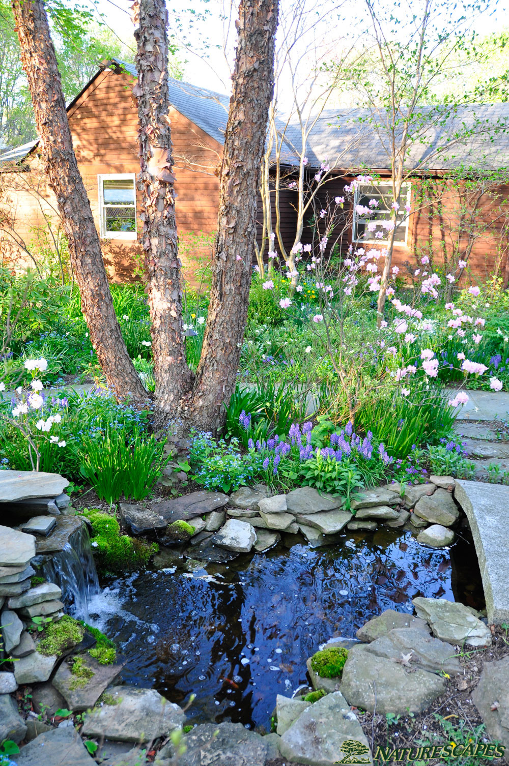 Water Gardens, Ponds & Waterfalls | Naturescapes Landscape ... on Small Backyard Pond With Waterfall id=65919