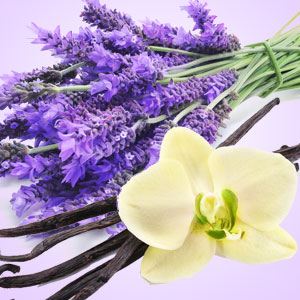 Best Fragrance Oils for Candles NG Vanilla & Lavender Type Fragrance Oil
