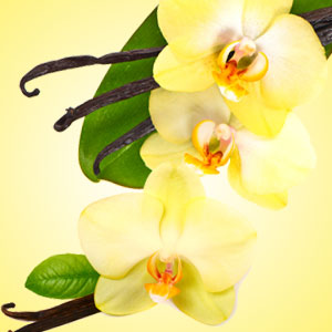 Best Vanilla Fragrance Oils Vanilla Blossoms Fragrance Oil
