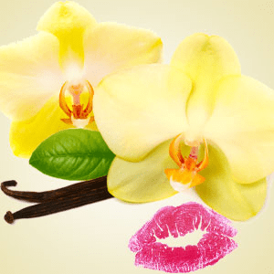 Best Flavor Oils for Lip Balm French Vanilla Flavoring Oil
