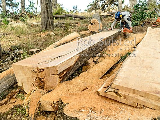Chainsaw Milling A Large Macrocarpa Tree Trunk Log Into