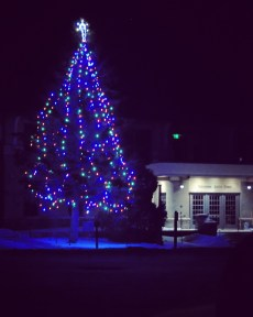 Christmas Tree outside Mammoth Hot Springs Courthouse, Yellowstone